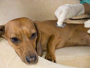 чем кормить собаку после отравления