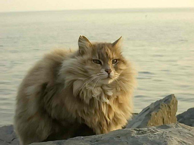 кошка без колтунов