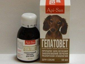 текут слюни у собаки как лечить