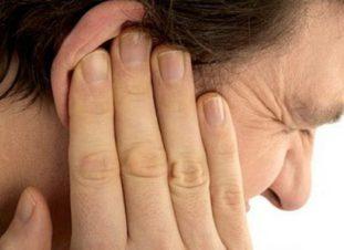 Количество паразитов в ухе может достигать нескольких десятков