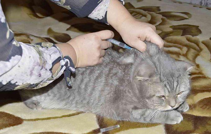как сделать укол в холку кошке
