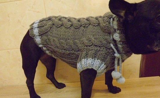 одежда для щенков французского бульдога