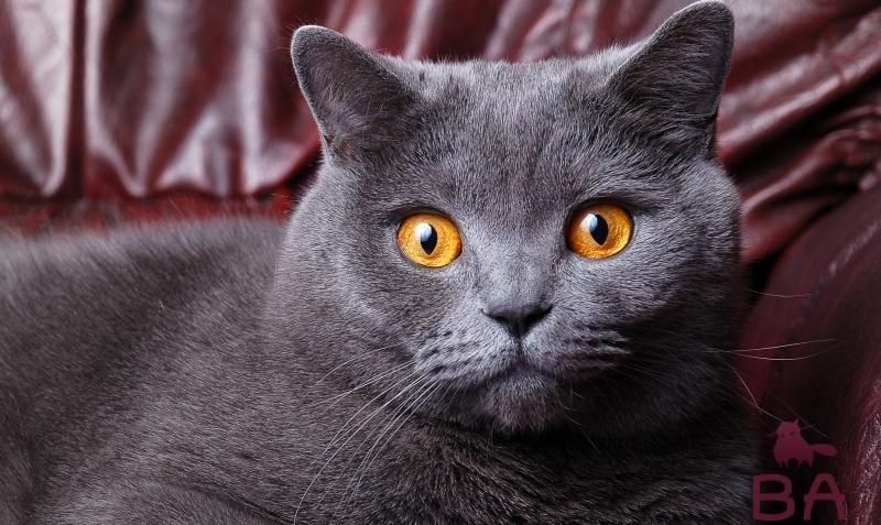 До какого возраста растут коты и кошки разных пород?