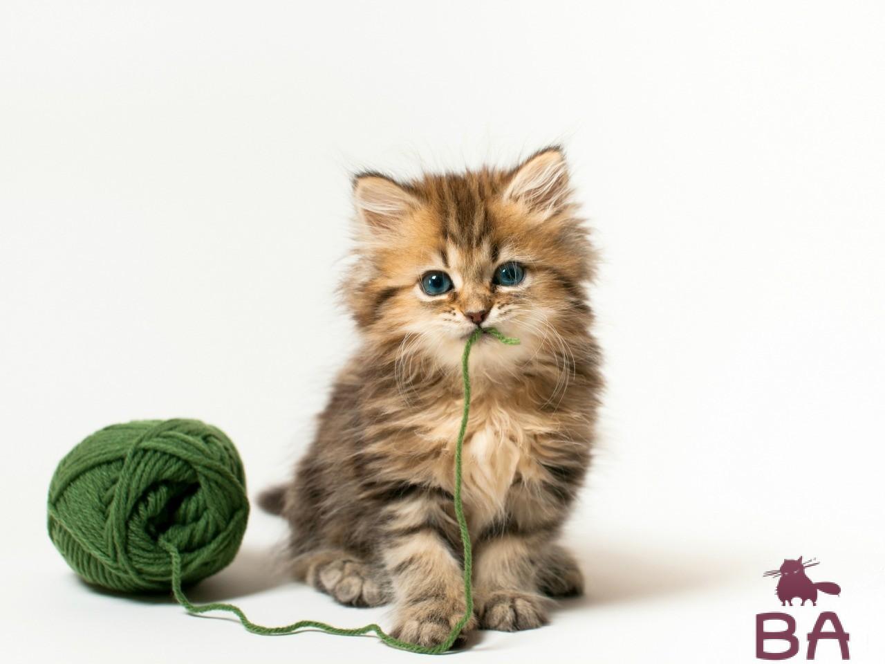 Подвижный котенок