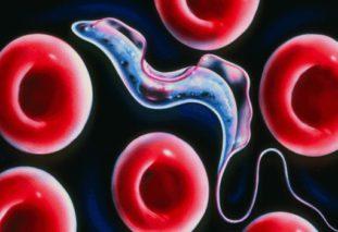 Особенности лечение и симптомы трипаносомоза