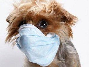простуда у собаки симптомы лечение