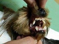 у собаки пахнет изо рта