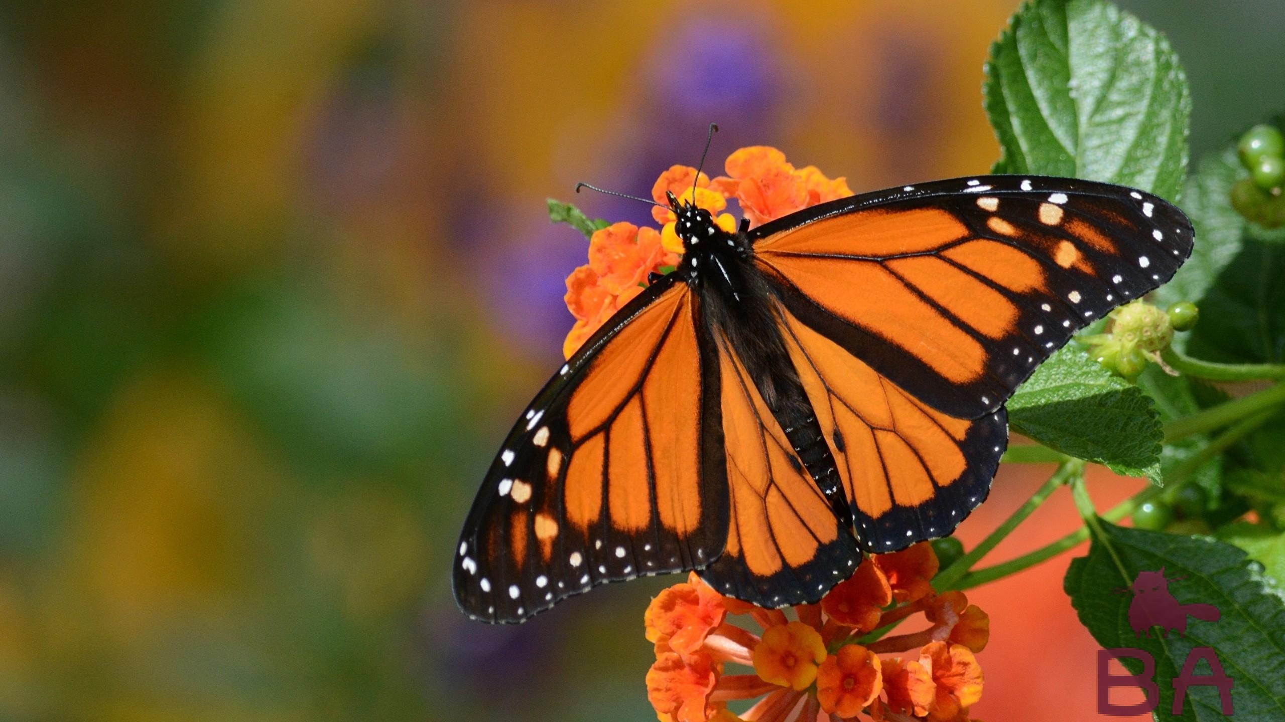 Продолжительность жизни бабочек интересные факты