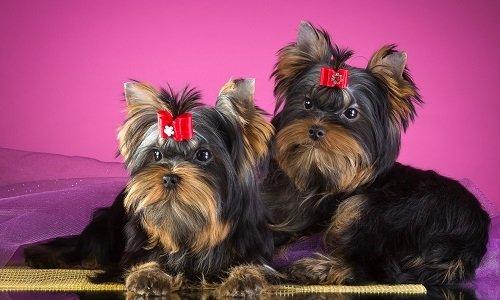 маленькие собаки породы название