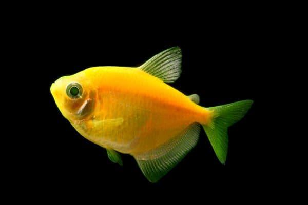 Красивые светящиеся рыбки