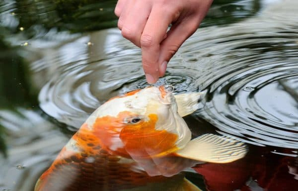 Снятся рыбки