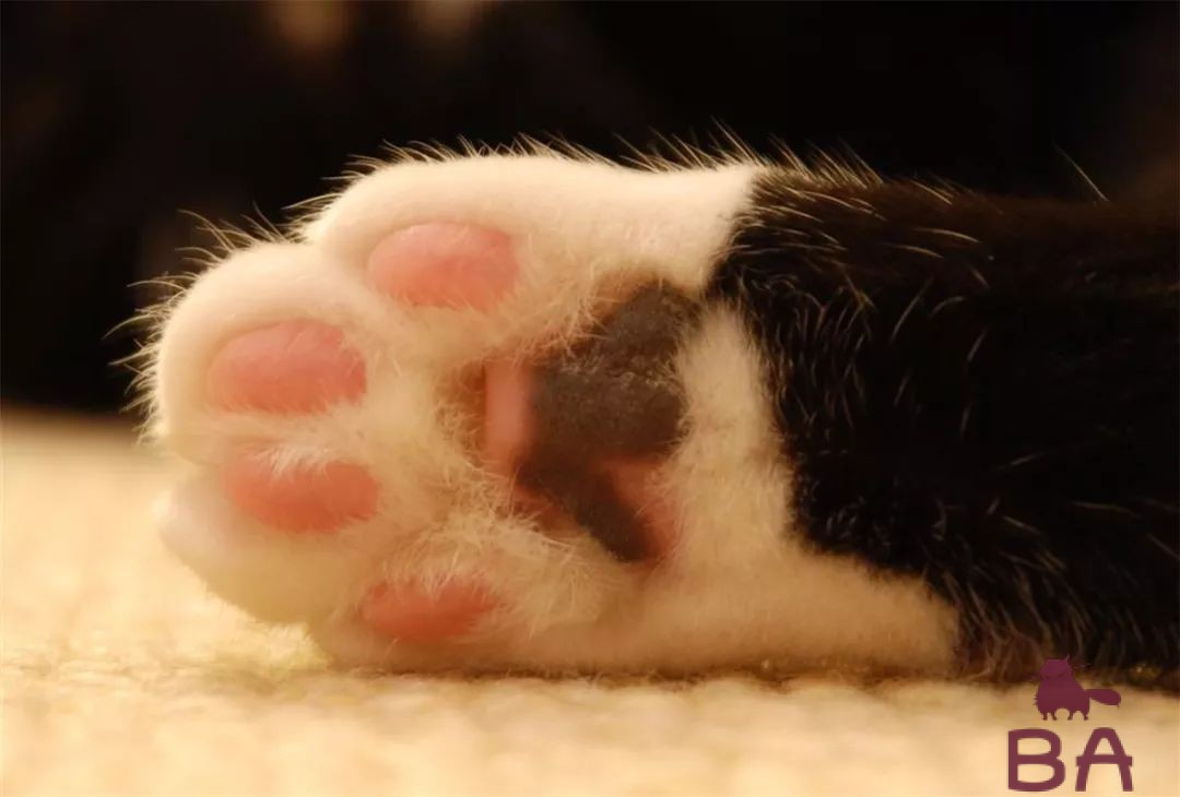 Удаление когтей у кошек: стоимость и реабилитационный период