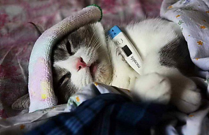 простуда у кошки