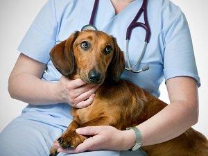 синдром кушинга у собак диагностика