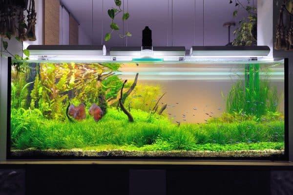 Большой аквариум для рыбок читайте статью