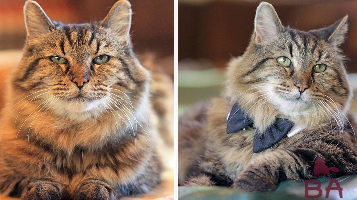Сколько лет коту по человеческим меркам?