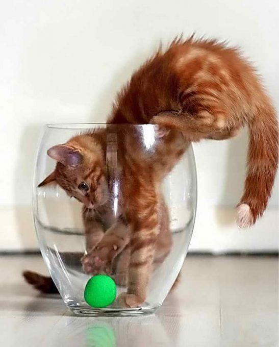 что нужно котенку на первое время