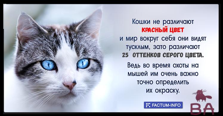 Какие цвета окружающего мира способны видеть кошки?