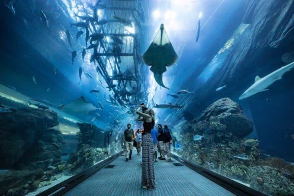 Океанариум Dubai Aquarium (Дубай)