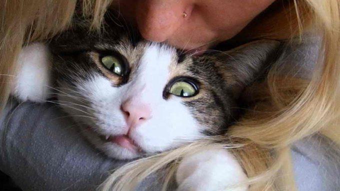 куда можно целовать кошку