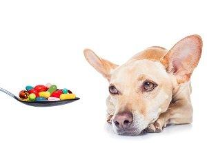 короновирусная инфекция у собак симптомы