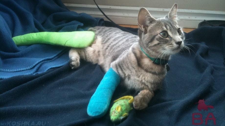 Переломы лап у кошки: как определить и что делать