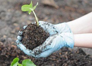 При работе на земле лучше надевать резиновые перчатки, чтобы кожа не контактировала с почвой