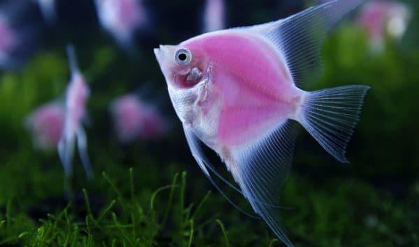 Как размножаются рыбы читайте статью