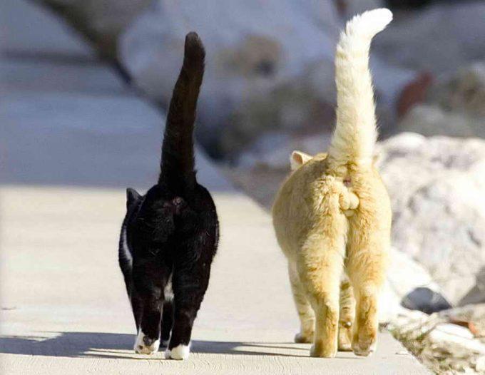 взрослые кот и кошка на прогулке