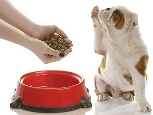 монжи корм для собак