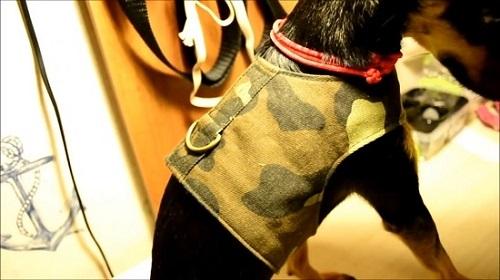 шлейка для собак фото