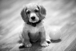 Кишечная непроходимость в большинстве случаев становится причиной смерти щенка