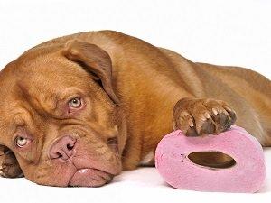 кровавый понос и рвота у собаки