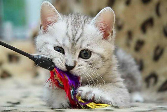 как играть с маленьким котенком