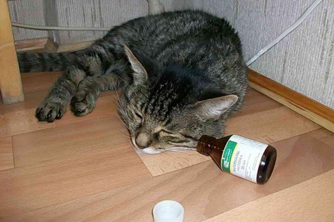 можно ли кошке давать валерьянку