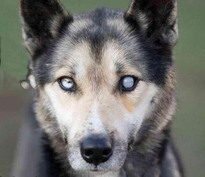 причины слепоты у собаки