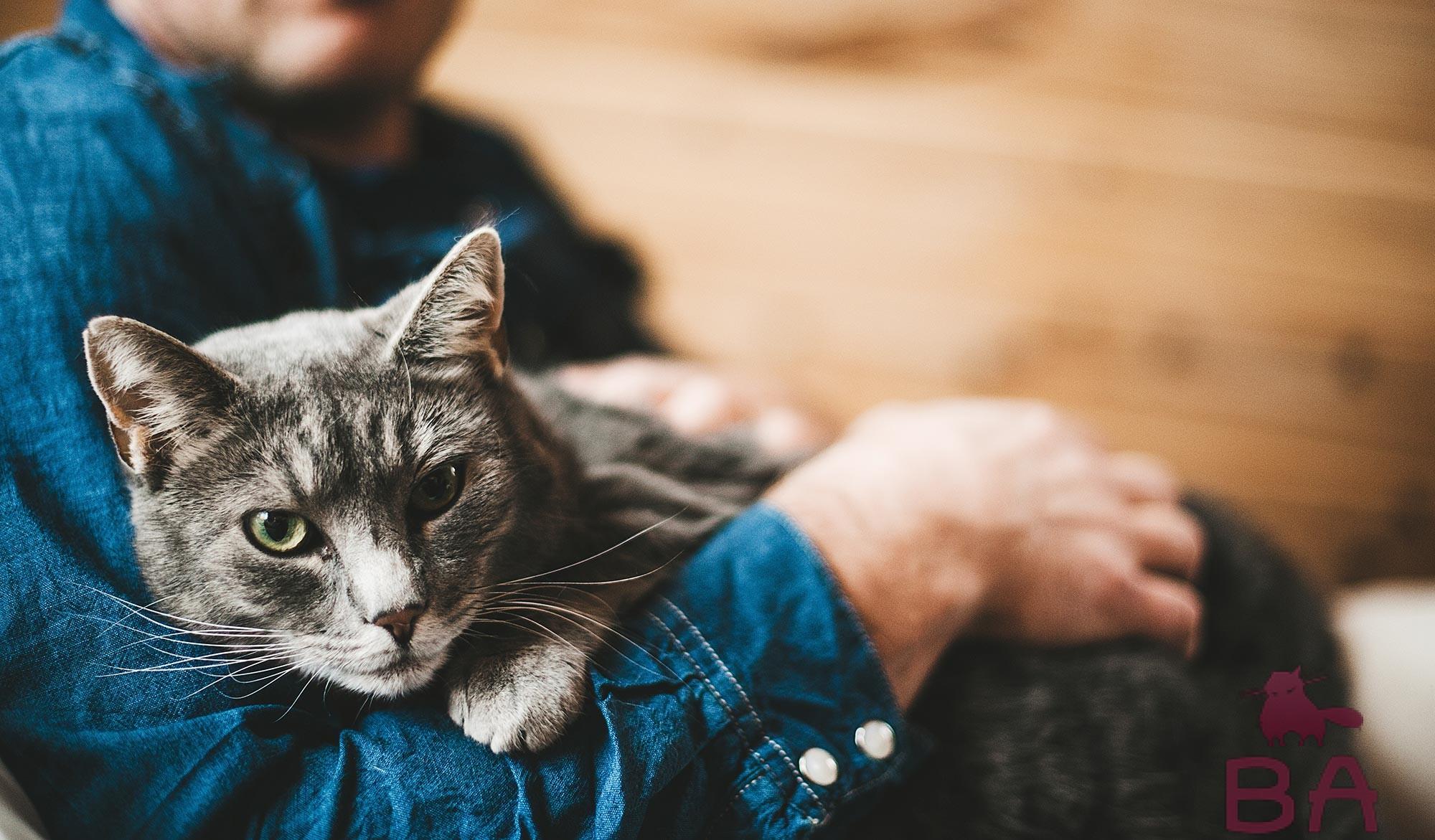 Человек и кошки смешные картинки, днем рождения открытка