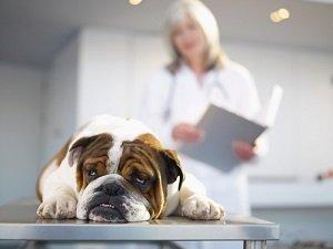 лечение гастрита у собак