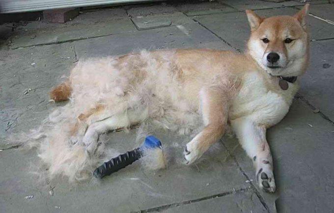 как бороться с линькой у собак