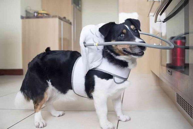 как помочь слепой собаке жить