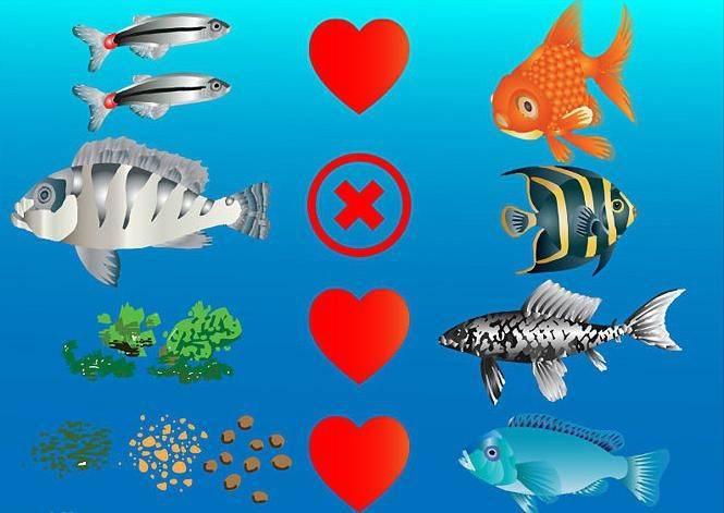 Несовместимость рыбок в аквариуме