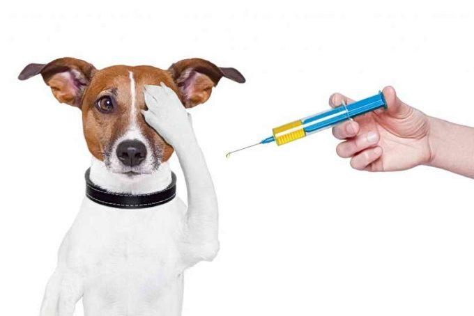 укол собаке самостоятельно