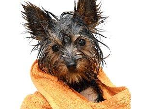 можно ли мыть собак