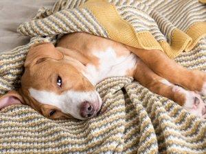 собака часто мочится дома