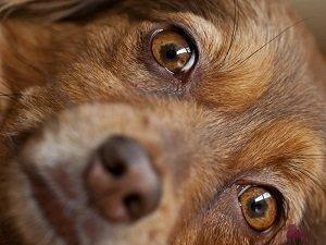 у собаки слезятся глаза как лечить