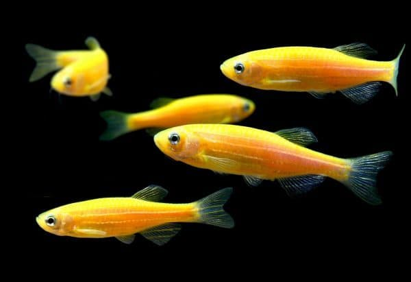 Красивые светящиеся рыбки в аквариуме