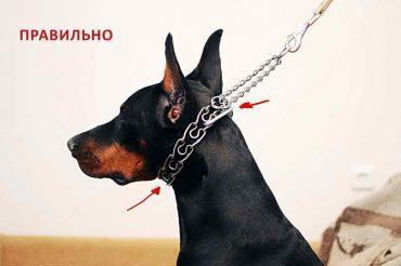 Как выбрать ошейник для собаки, на что обратить внимание при покупке