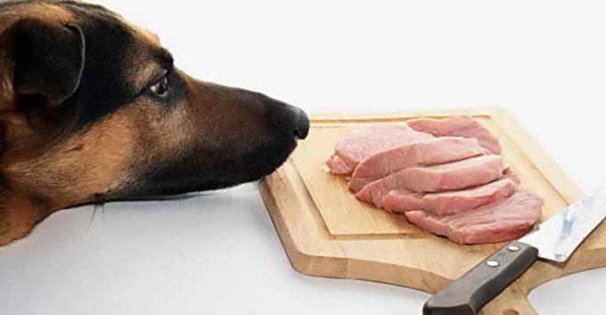 свинина для собаки