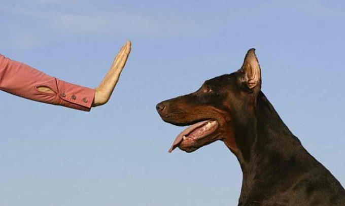 как не допустить ошибки в обучении собаки команде &quot,Фу&quot,