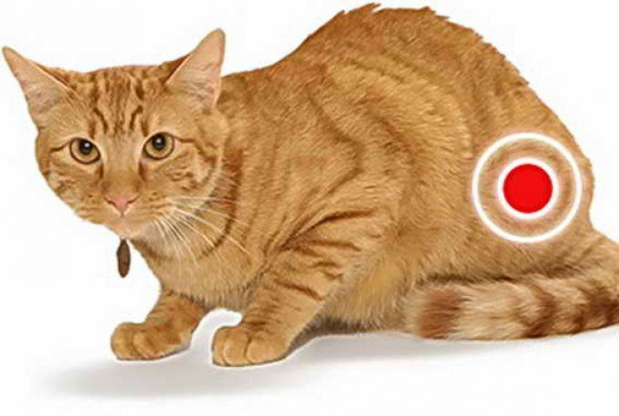 цистит у кошки